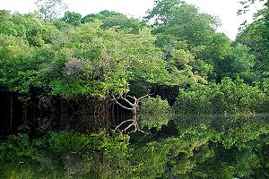 The Amazon and Oil Contamination … Rainforest Action NetWork