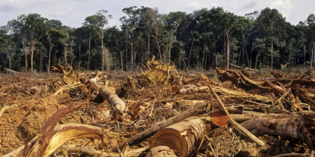Brazil is on the verge of gutting its forest protection laws