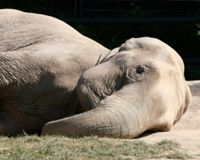 Cameroon, Stop killing protected wildlife – Elephants