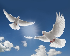 TumblrDoves-doves-31209090-2560-2069